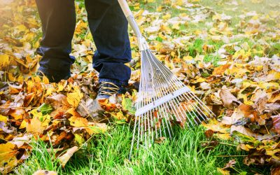 Head Start Fall Cleanup – October/20/2021